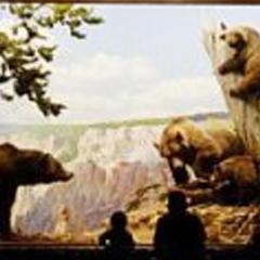 John Parish - How Animals Move (2002)
