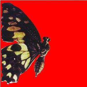 Moonspell - Butterfly Effect (1999)