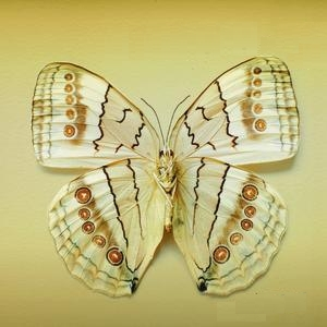 Xavier Rudd - White Moth (2007)