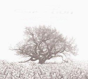 Various Artists - Sensation White 2007 (2007)