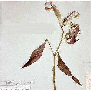 Kathleen Edwards - Asking for Flowers (2008)