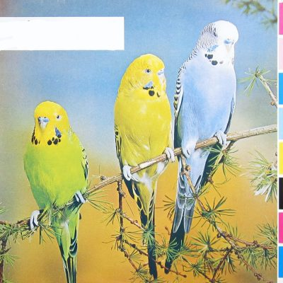 Rain Parade - Beyond the Sunset (1985)
