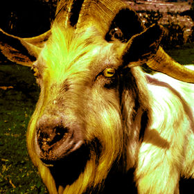 Grumblecake - Electric Goat (2009)