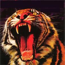 Tygers of Pan Tang - Wild Cat (1980)